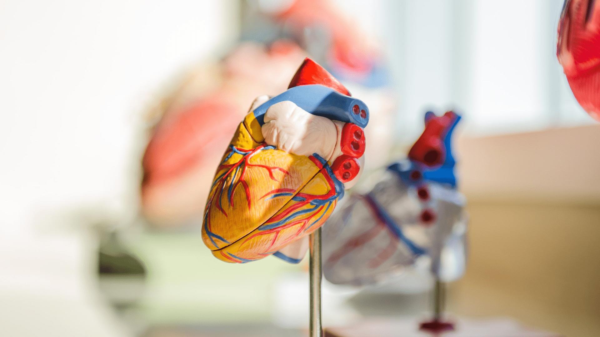 5 Atitudes Para Manter o Coração Saudável